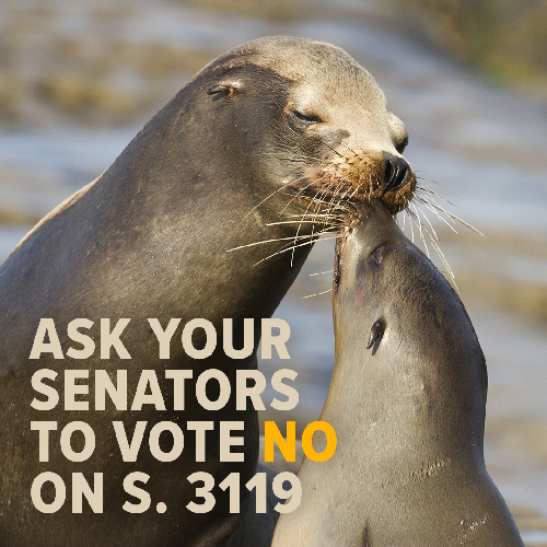 Please Ask Your Senators to Vote Against Sea Lion Killings