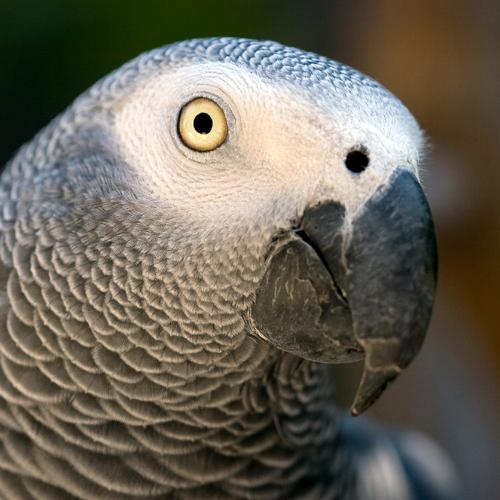 Bird Trade