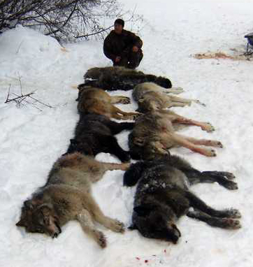 Photo of Wolves from bowsite.com
