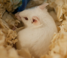 Click here to find out more about Animals in Laboratories