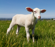 Click here to find out more about Farm Animals