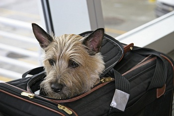 Companion Animals and Air Transportation