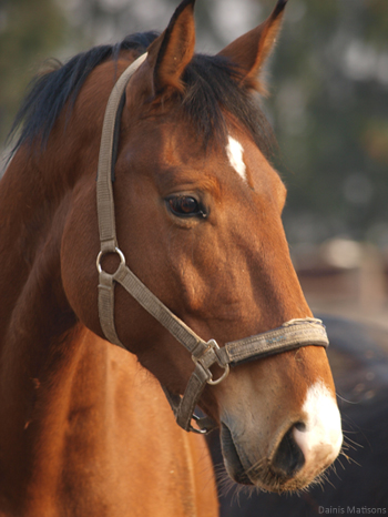 Every 5 minutes an American horse is slaughtered for human consumption. Stop the slaughter.