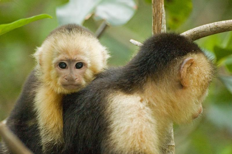 Urge Your Representative to Support the Captive Primate Safety Act - photo from flickr Sang Trinh