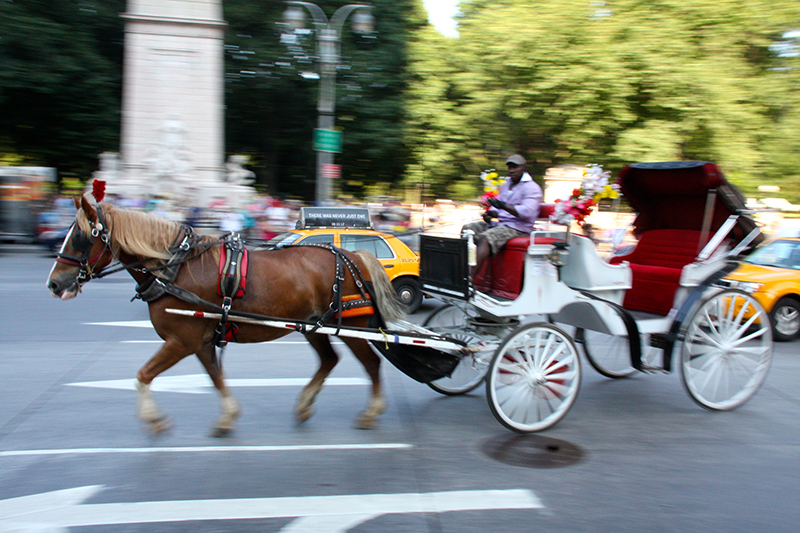 Help End Horse-Drawn Carriages as a Tourist Attraction - Photo by Juha Uitto