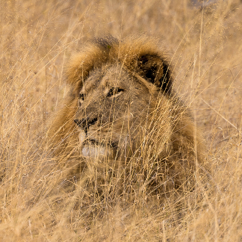 Ask Congress to Limit Imports of Trophy Hunted Species - Photo by Vince O'Sullivan