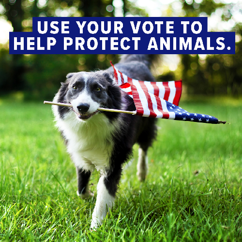 Vote - to Help Animals