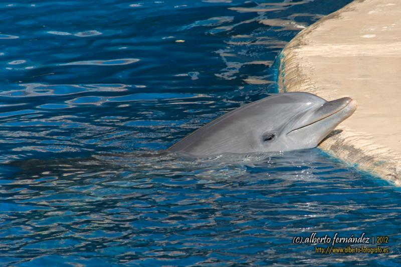Tell Hawaii Board of Agriculture to Please Protect Captive Dolphins!. Photo by PROAlberto Fernandez