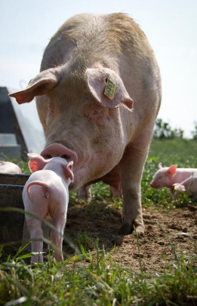 High Welfare Alternatives to Factory Farming