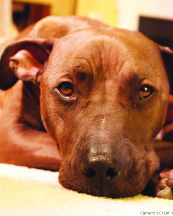 Animal Fighting Spectator Prohibition Act