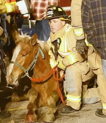Horse Transportation Safety Act