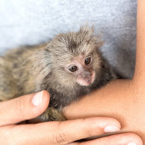 Help End Inhumane Pet Primate Trade