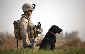 Coot, an improvised explosive device detection dog, with a U.S. Marine on patrol in Afghanistan. Coot and other military working dogs routinely risk their lives in war zones - DVIDS
