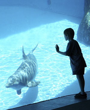 Dolphins in Captivity