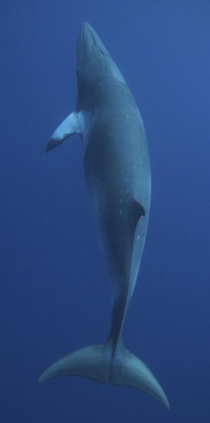 Marine Life   Animal Welfare Institute