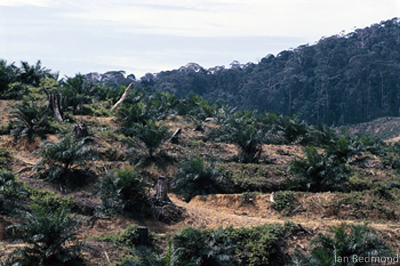 Deforestation - Photo by Rainforest Action Network