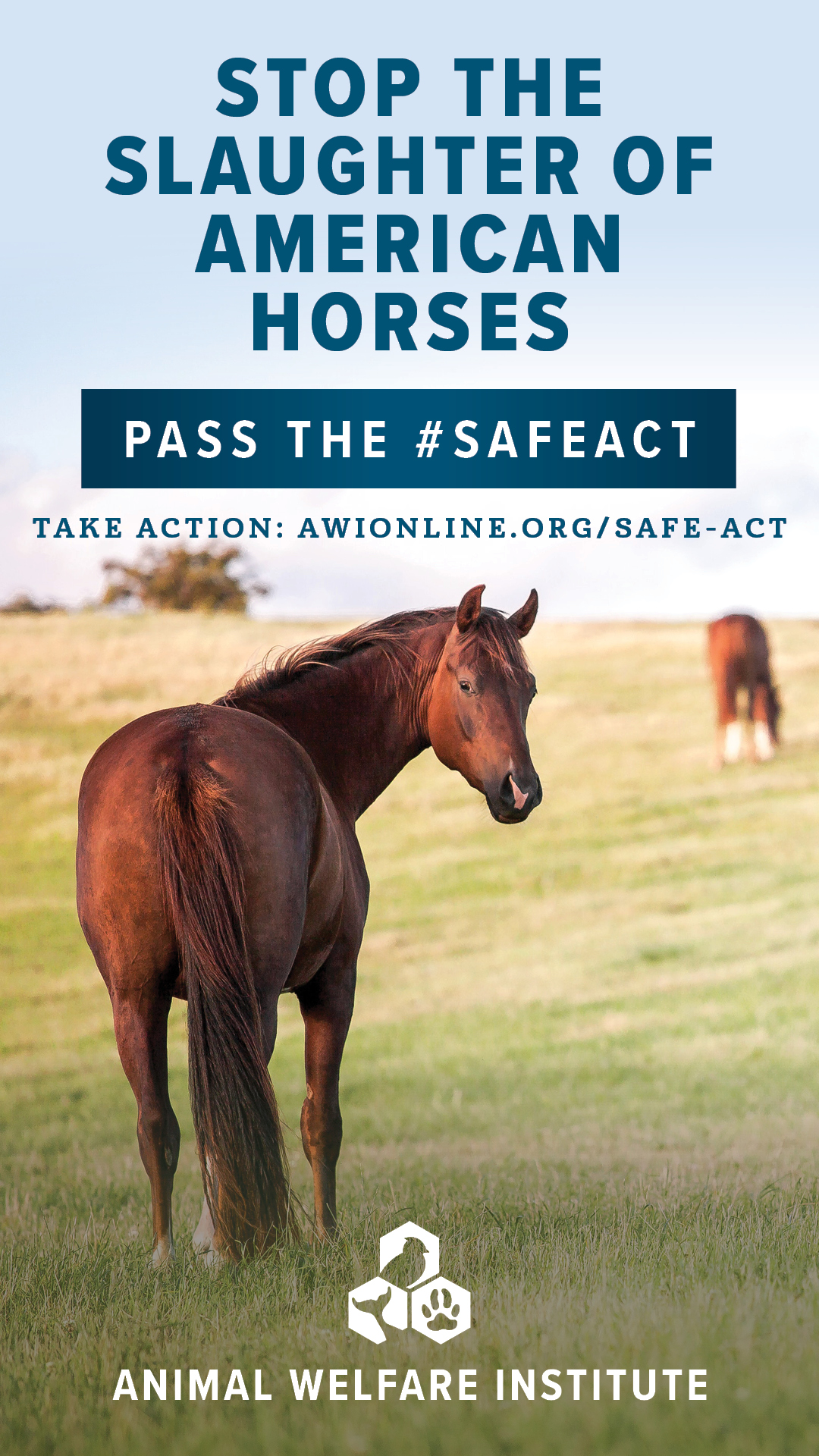 Stop the Slaughter of American Horses - Pass the #SAFEAct
